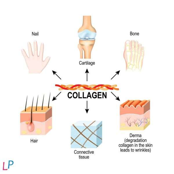 POT HUID - HAAR - GEWRICHTEN COLLAGEEN-ELIXIR van Bioactieve peptides 95% Ingrediënt neutrale smaak 27dosissen